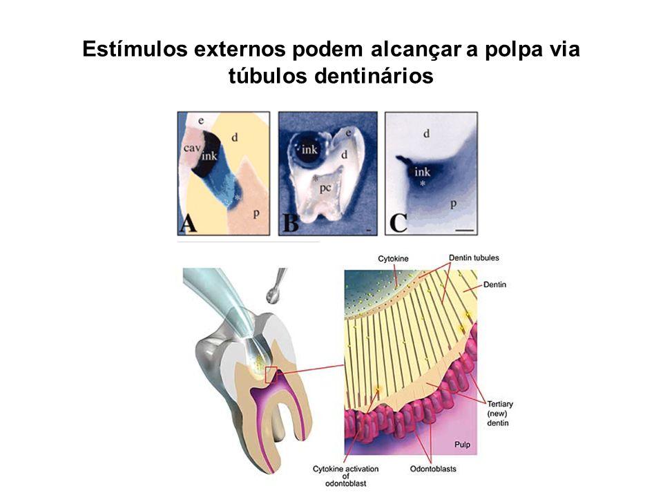 Estímulos externos podem alcançar a polpa via túbulos dentinários