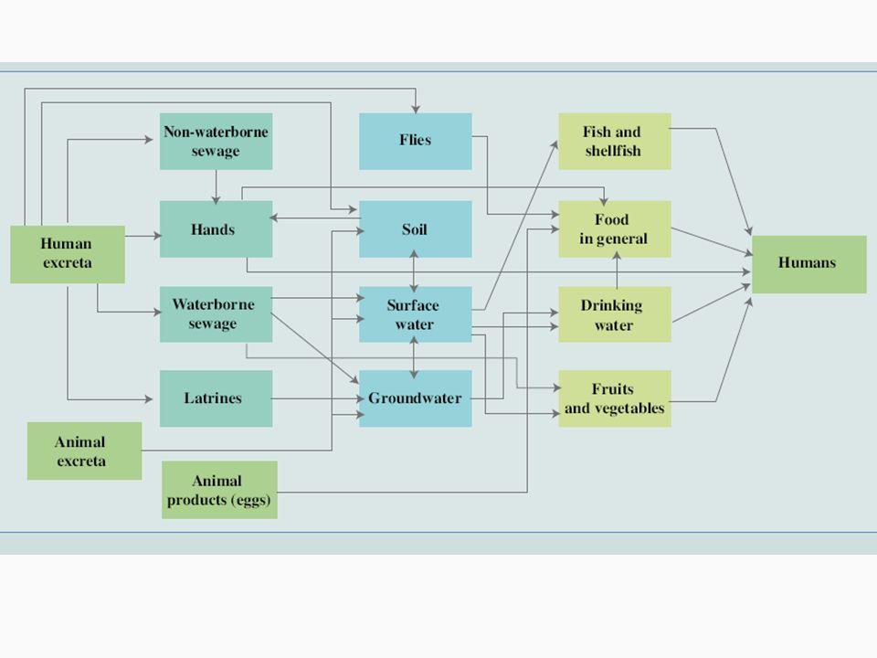 Classificação Doenças infecciosas relacionadas com a água Doenças infecciosas relacionadas com excretas (esgotos) Doenças infecciosas relacionadas com o lixo Doenças infecciosas relacionadas com a habitação