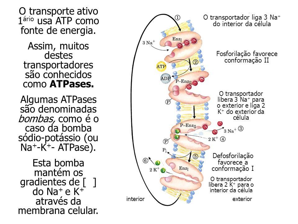 O transportador liga 3 Na + do interior da célula Fosforilação favorece conformação II O transportador libera 3 Na + para o exterior e liga 2 K + do exterior da célula Defosforilação favorece a conformação I O transportador libera 2 K + para o interior da célula interiorexterior O transporte ativo 1 ário usa ATP como fonte de energia.