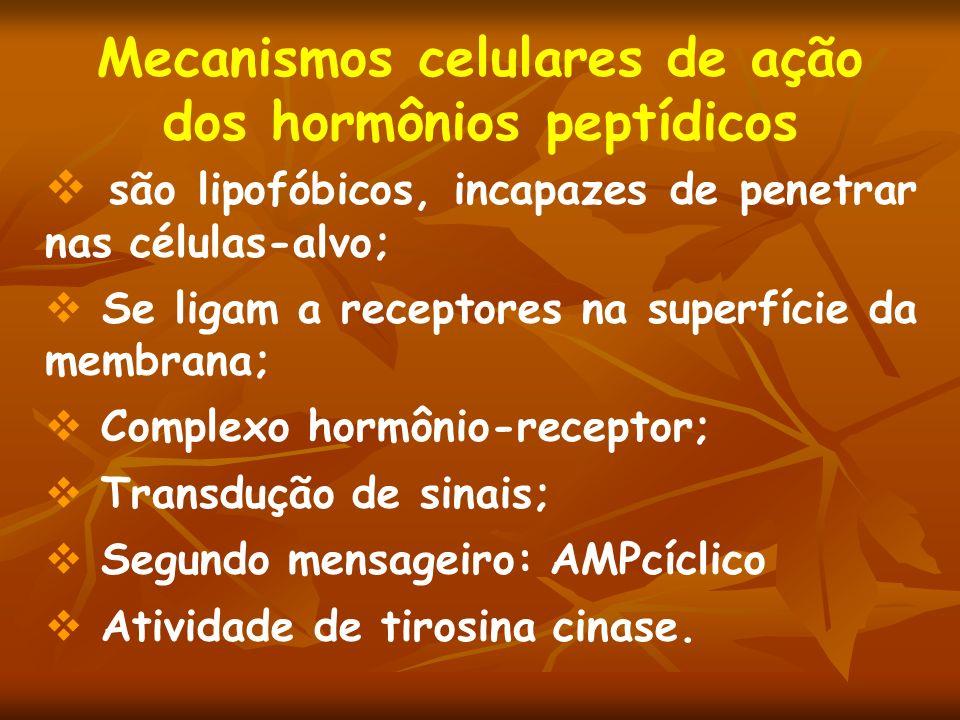 Mecanismos celulares de ação dos hormônios peptídicos são lipofóbicos, incapazes de penetrar nas células-alvo; Se ligam a receptores na superfície da