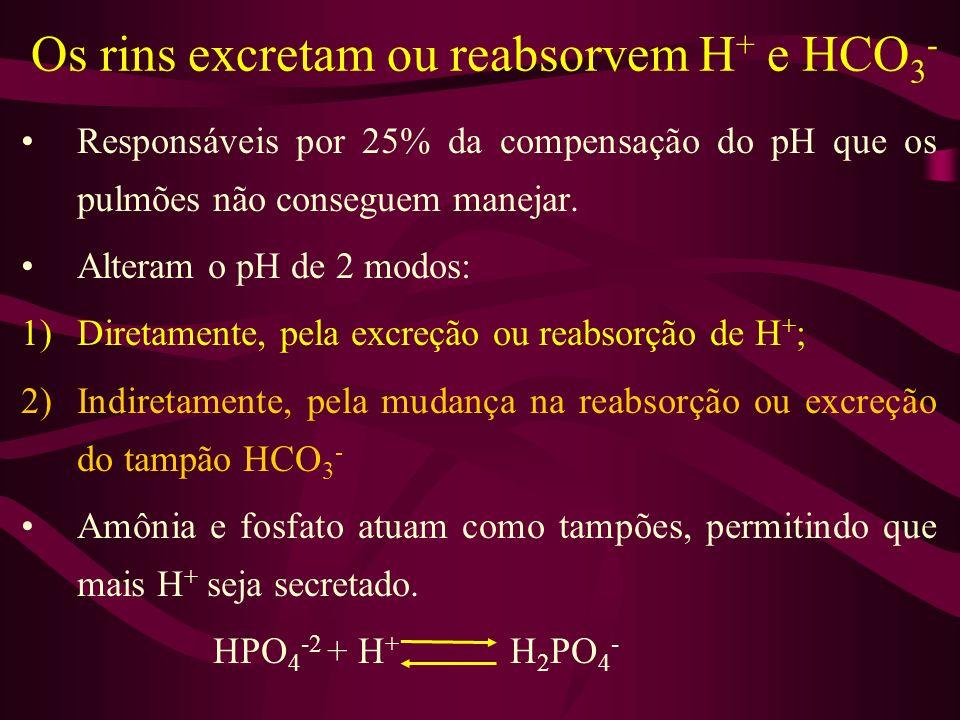 Os rins excretam ou reabsorvem H + e HCO 3 - Responsáveis por 25% da compensação do pH que os pulmões não conseguem manejar. Alteram o pH de 2 modos:
