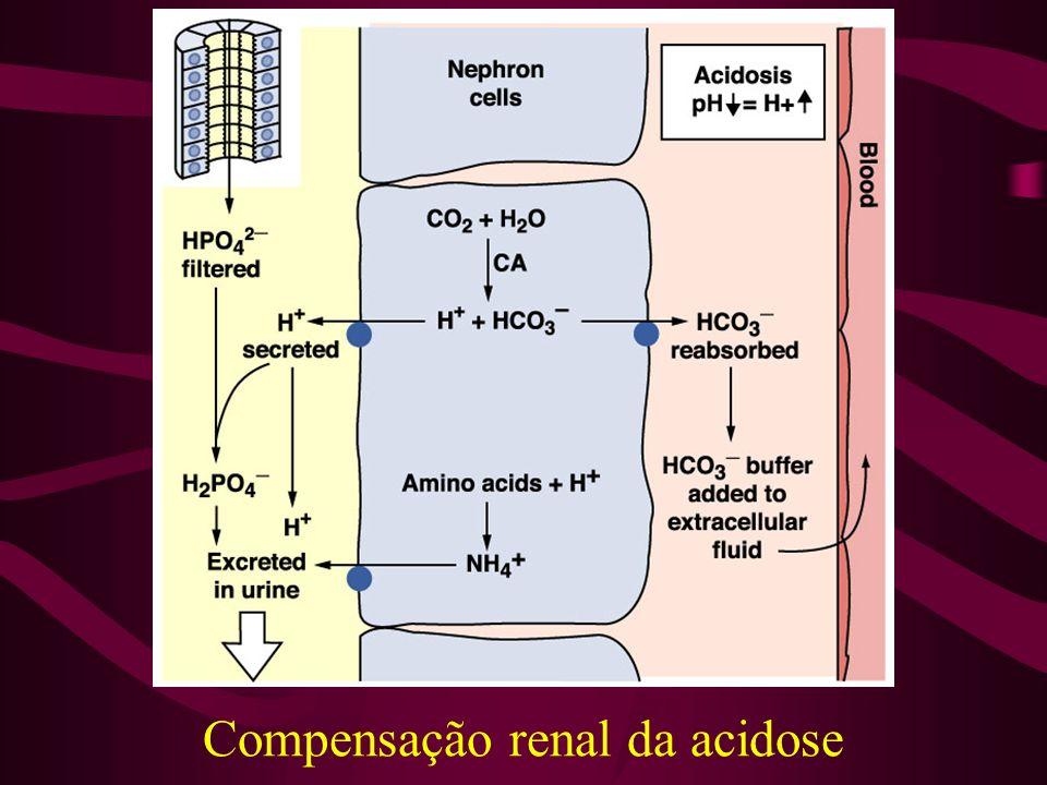 Compensação renal da acidose