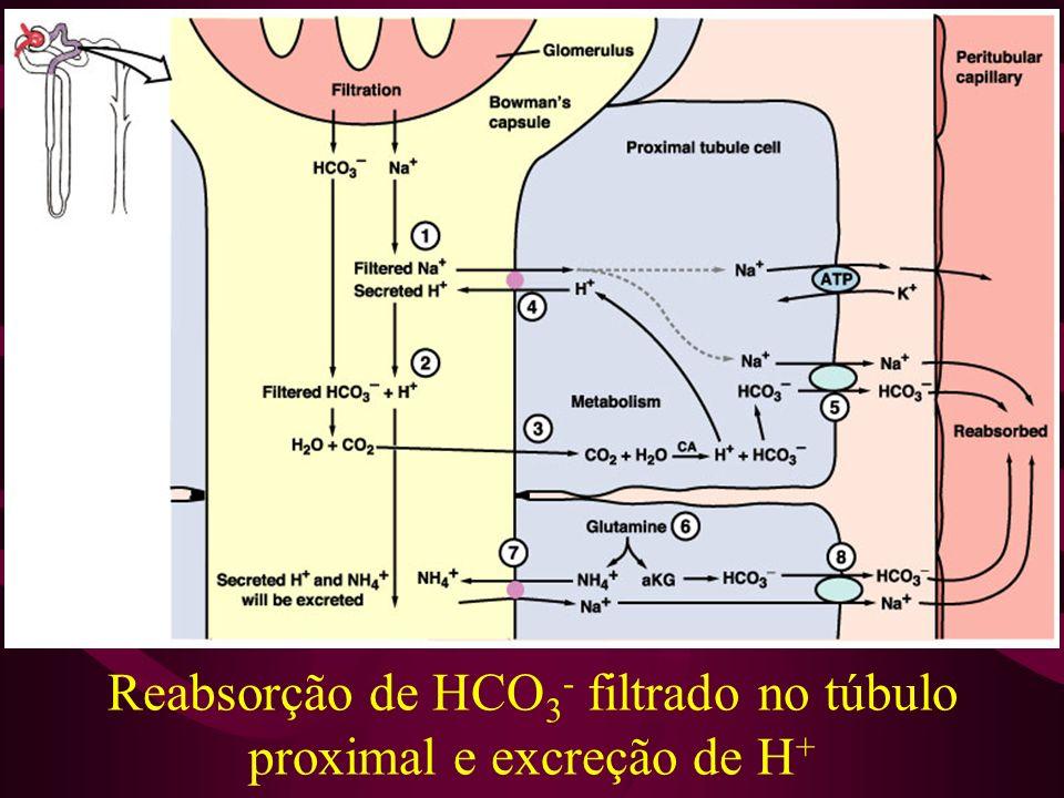 Reabsorção de HCO 3 - filtrado no túbulo proximal e excreção de H +