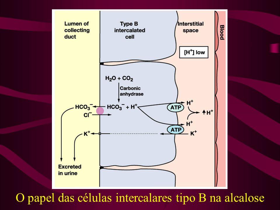 O papel das células intercalares tipo B na alcalose