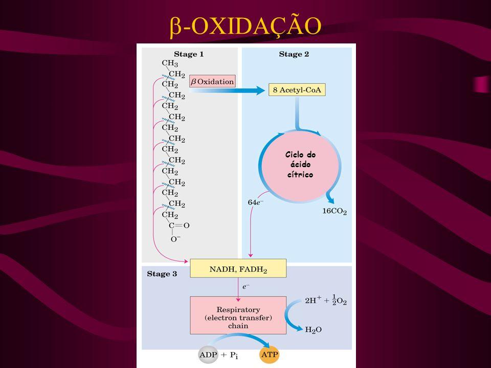-OXIDAÇÃO Ciclo do ácido cítrico