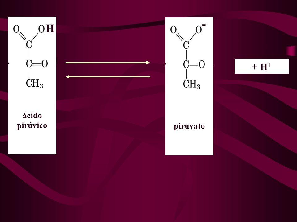 H - + H + ácido pirúvico piruvato H