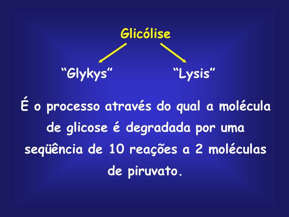 GLICOSE glicogênio, amido e sacarose piruvato ribose-5- fosfato armazenagem Oxidação pela via glicolítica Oxidação pela via das pentoses fosfato
