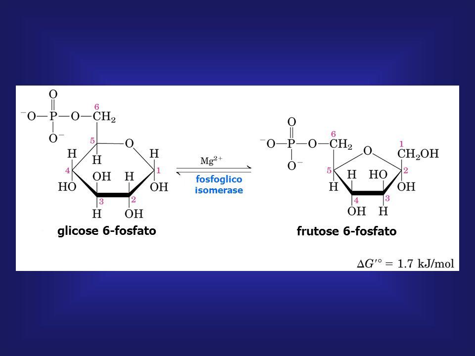 glicose glicose 6-fosfato hexoquinase