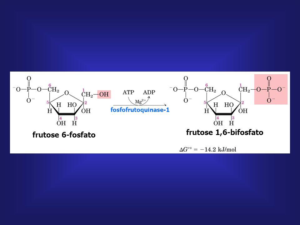 frutose 6-fosfato glicose 6-fosfato fosfoglico isomerase