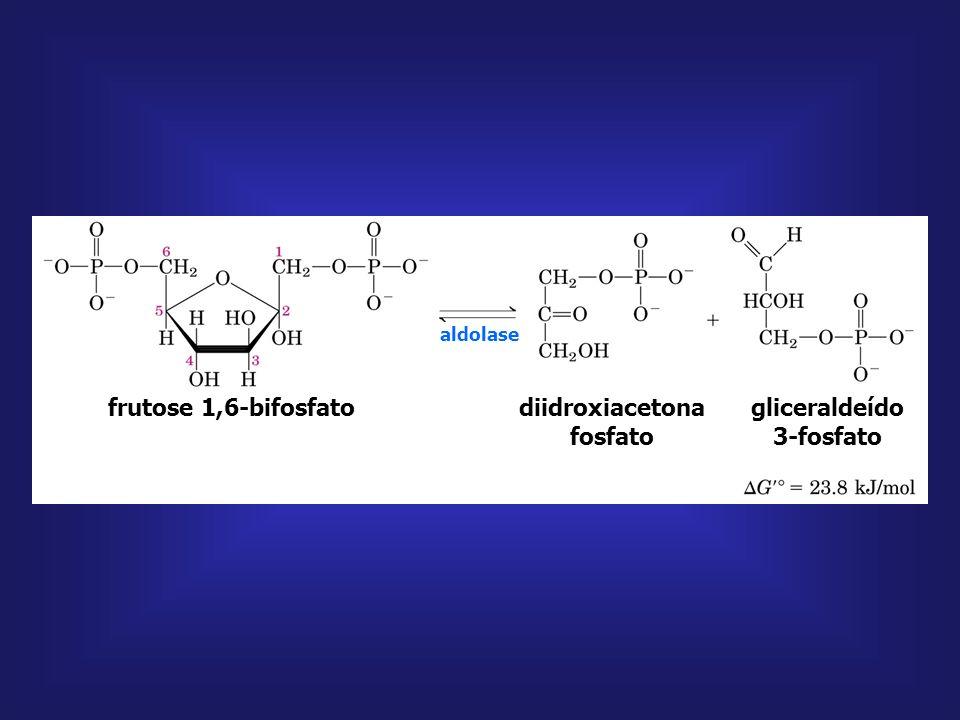 frutose 6-fosfato fosfofrutoquinase-1 frutose 1,6-bifosfato