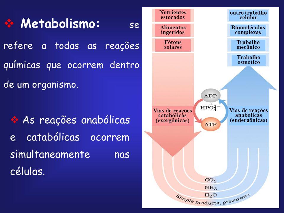 Balanço Final Glicose + 2ATP + 2NAD + + 4ADP + 2P i 2 piruvato + 2ADP + 2NADH + 2H + + 4ATP + 2H 2 O Glicose + 2NAD + + 2ADP + 2P i 2piruvato + 2NADH + 2H + + 2ATP + 2H 2 O http://www.johnkyrk.com/glycolysis.swf