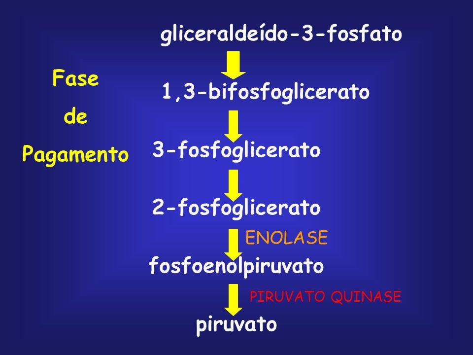 glicose glicose 6-fosfato frutose 6-fosfato frutose 1,6-bifosfato gliceraldeído 3-fosfato diidroxiacetona fosfato Fase Preparatória Fosforilação da gl