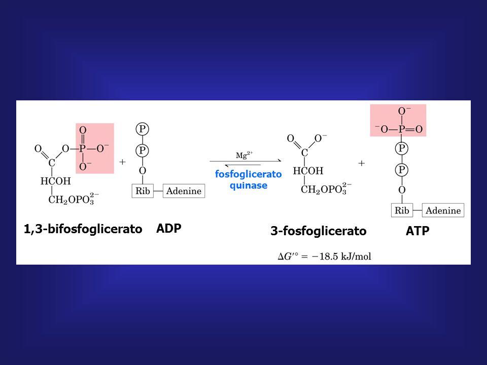gliceraldeído 3-fosfato gliceraldeído fosfato desidrogenase fosfato inorgânico 1,3-bifosfoglicerato