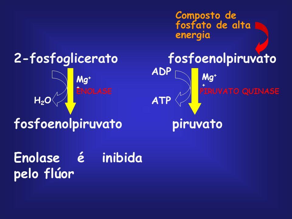 fosfoglicero mutase 3-fosfoglicerato2-fosfoglicerato
