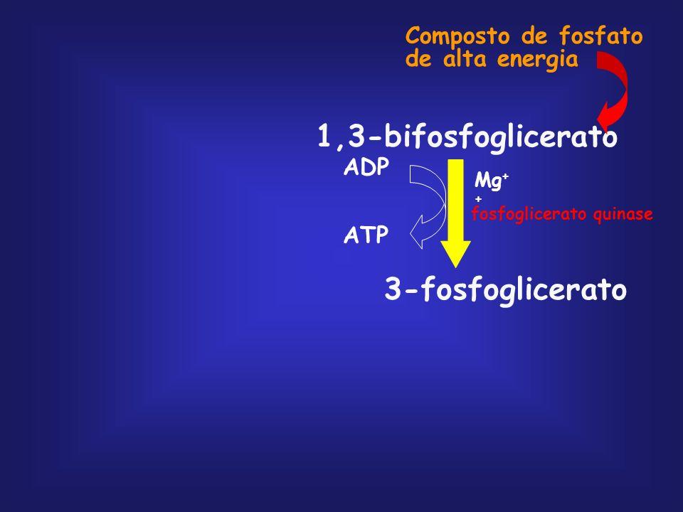 gliceraldeído 3-fosfato (2) 1,3-bifosfoglicerato (2) 3-fosfoglicerato (2) 2-fosfoglicerato (2) fosfoenolpiruvato (2) piruvato (2) Fase de Pagamento Co
