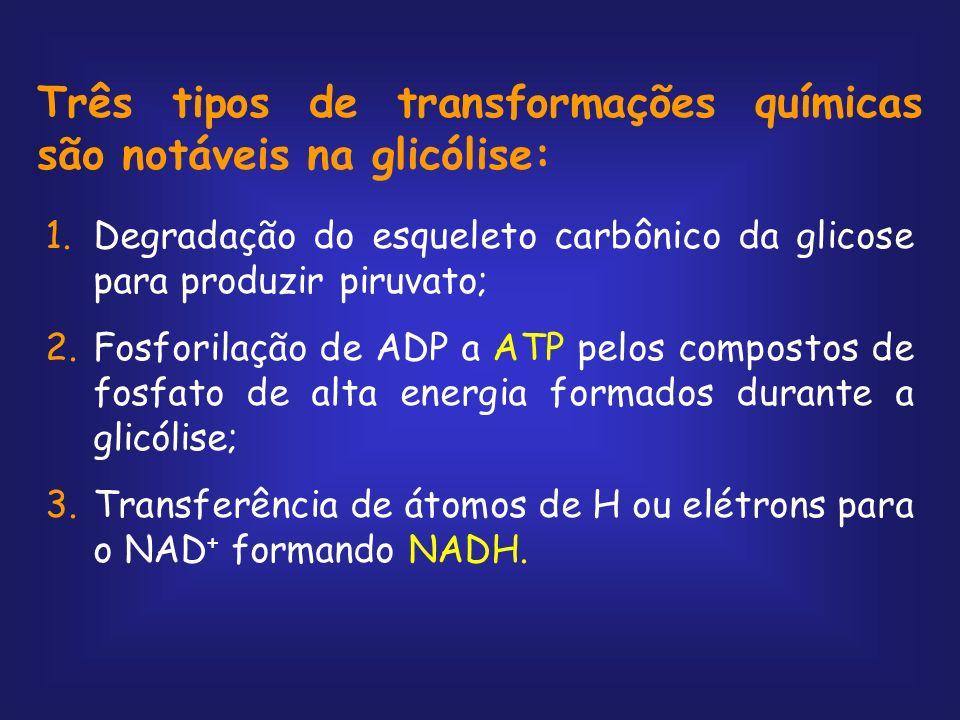 Balanço Final Glicose + 2ATP + 2NAD + + 4ADP + 2P i 2 piruvato + 2ADP + 2NADH + 2H + + 4ATP + 2H 2 O Glicose + 2NAD + + 2ADP + 2P i 2piruvato + 2NADH