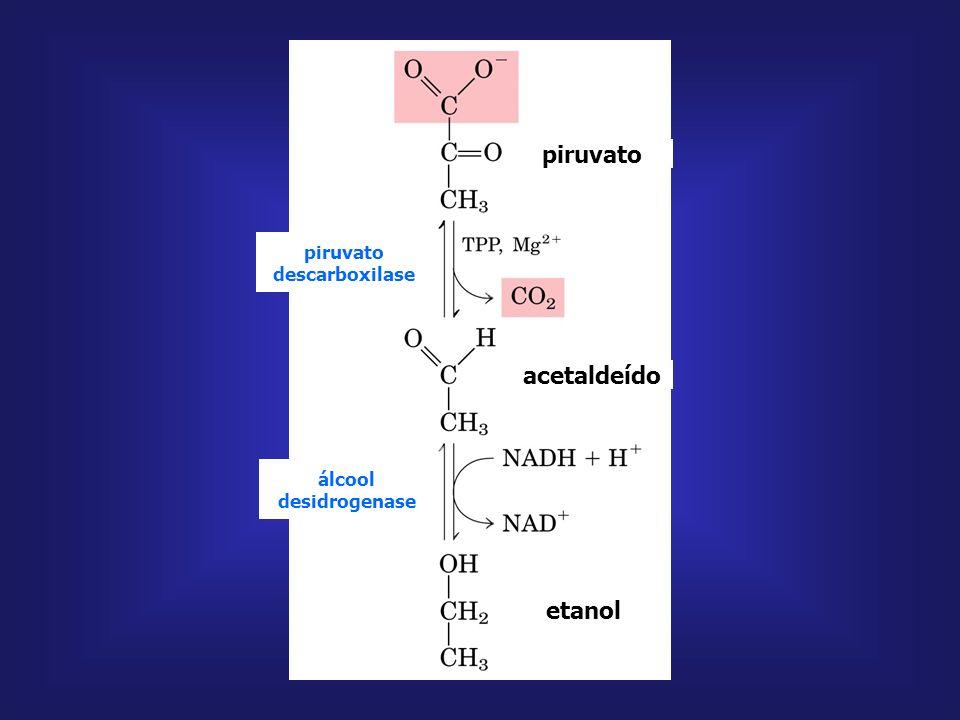 lactato desidrogenase piruvato lactato