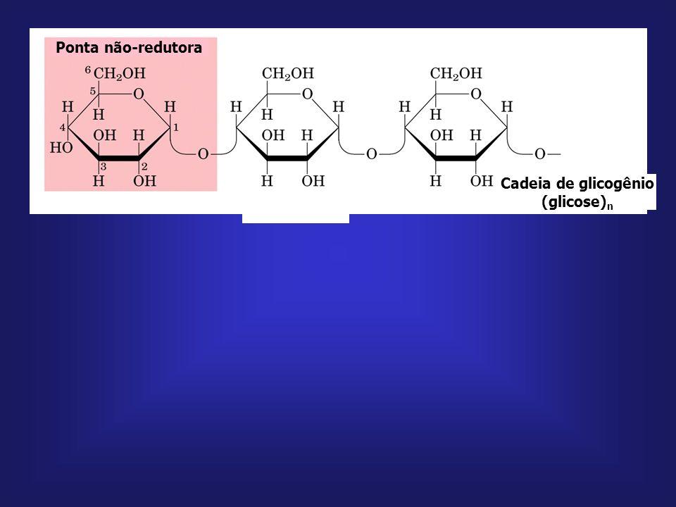 glicose lactose trealose sacarose glicogênio; amido galactose frutose manose glicose 1- fosfato UDP-glicose glicose 6- fosfato frutose 6- fosfato mano