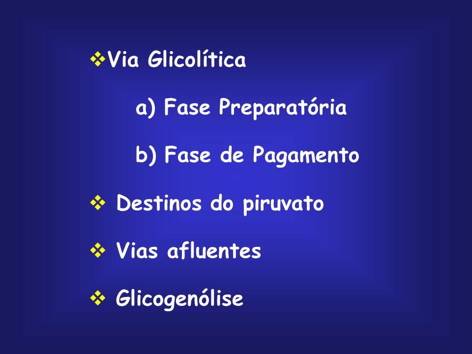 glicose lactose trealose sacarose glicogênio; amido galactose frutose manose glicose 1- fosfato UDP-glicose glicose 6- fosfato frutose 6- fosfato manose 6-fosfato frutose 1-fosfato frutose 1,6- bifosfato gliceraldeído diidroxiacetona fosfato gliceraldeído 3- fosfato fosforilase hexoquinase Vias Afluentes