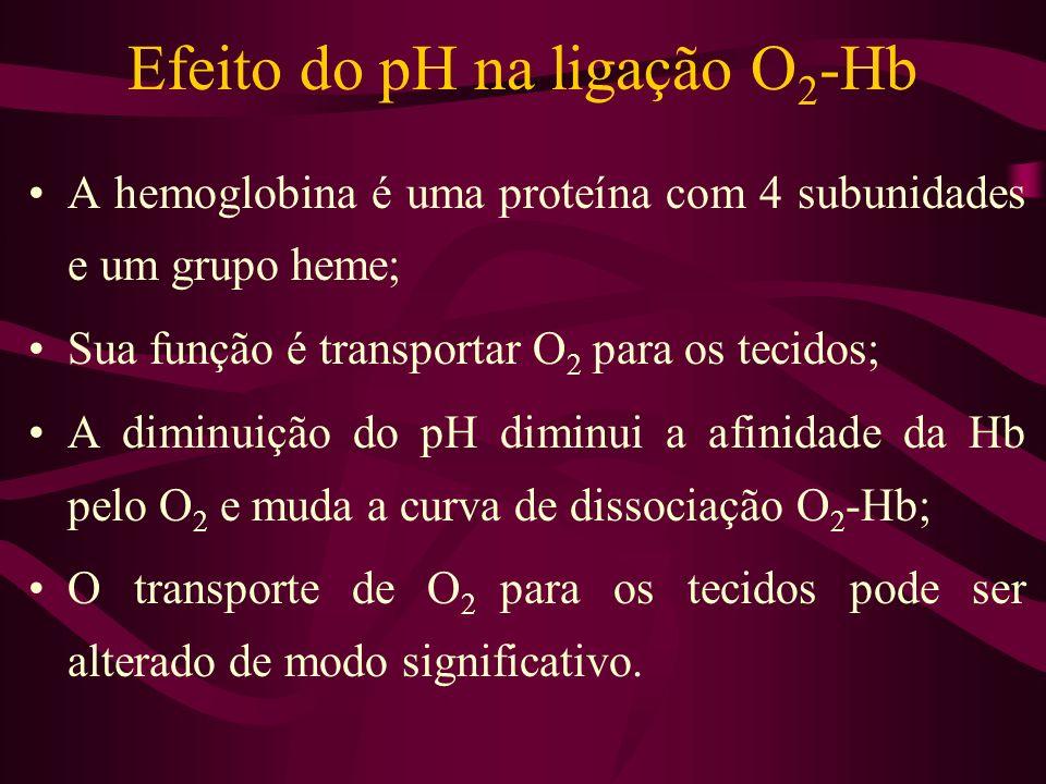 Efeito do pH na ligação O 2 -Hb A hemoglobina é uma proteína com 4 subunidades e um grupo heme; Sua função é transportar O 2 para os tecidos; A diminu