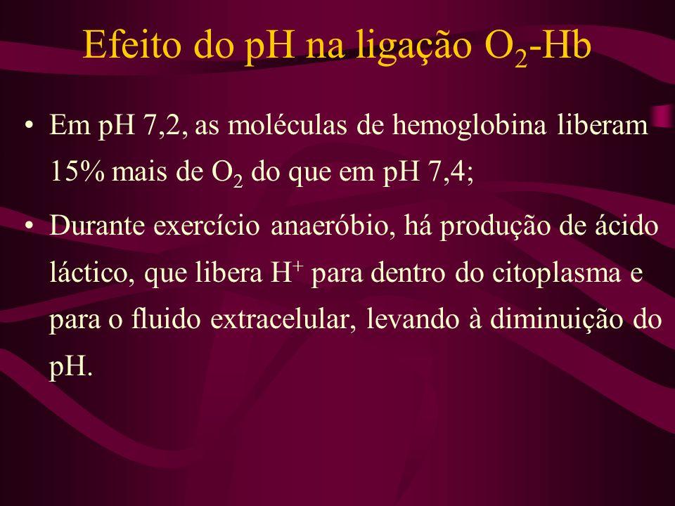 Efeito do pH na ligação O 2 -Hb Em pH 7,2, as moléculas de hemoglobina liberam 15% mais de O 2 do que em pH 7,4; Durante exercício anaeróbio, há produ