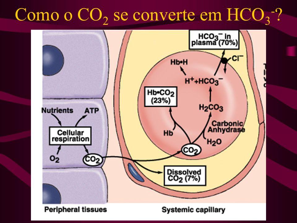 Como o CO 2 se converte em HCO 3 - ?