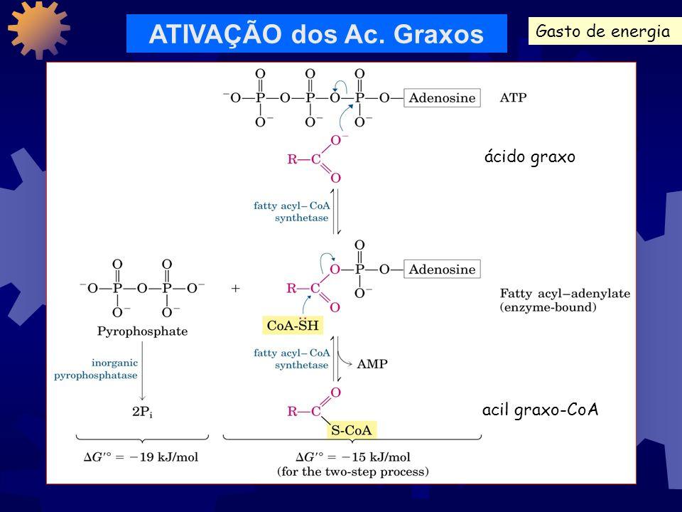 COMO O GLICEROL É APROVEITADO? glicerol L-glicerol 3-fosfato diidroxiacetona fostato D-gliceraldeído 3-fosfato glicólise Apenas 5% da energia disponív