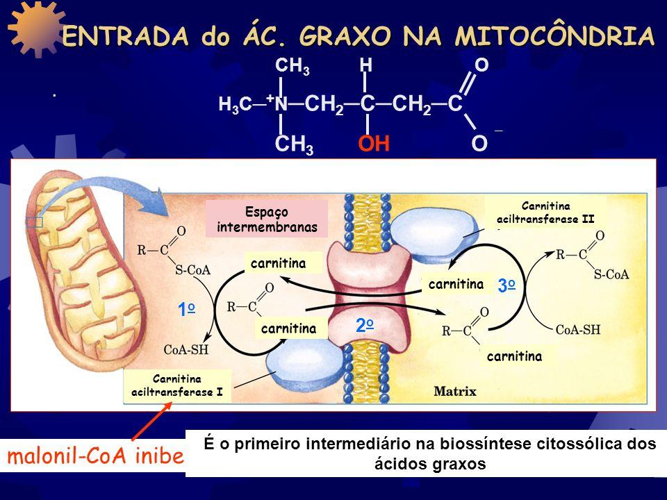 ácido graxo acil graxo-CoA Gasto de energia ATIVAÇÃO dos Ac. Graxos