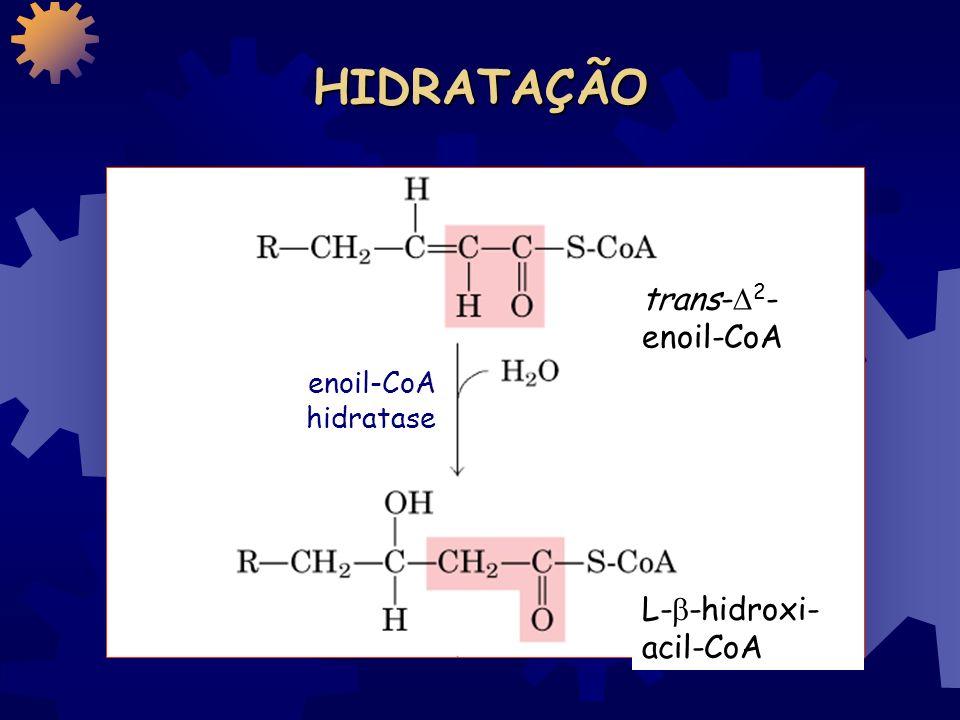 1 a OXIDAÇÃO 1 a OXIDAÇÃO Palmitoil-CoA trans- 2 - enoil-CoA acil-CoA desidrogenase