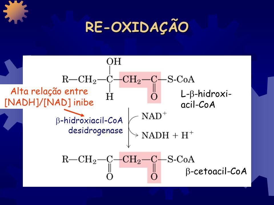HIDRATAÇÃO trans- 2 - enoil-CoA L- -hidroxi- acil-CoA enoil-CoA hidratase