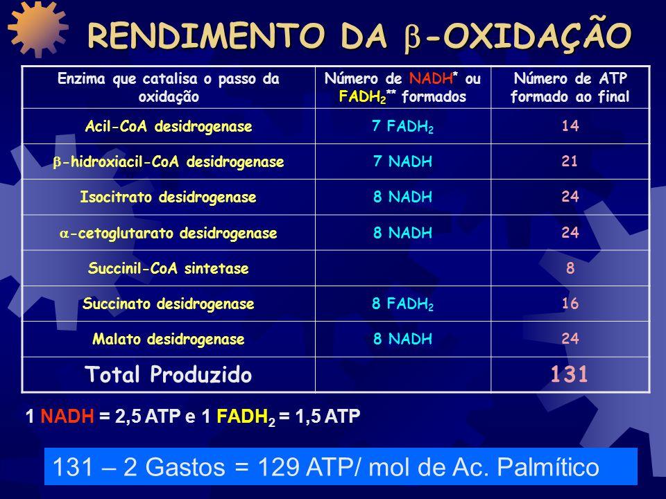 EQUAÇÃO GLOBAL DA - OXIDAÇÃO Palmitoil-CoA + 7 FAD + 7 NAD + + 7 H 2 O + 7 CoA 8Acetil-CoA + 7 FADH2 + 7 NADH + 7 CoA + 7H +