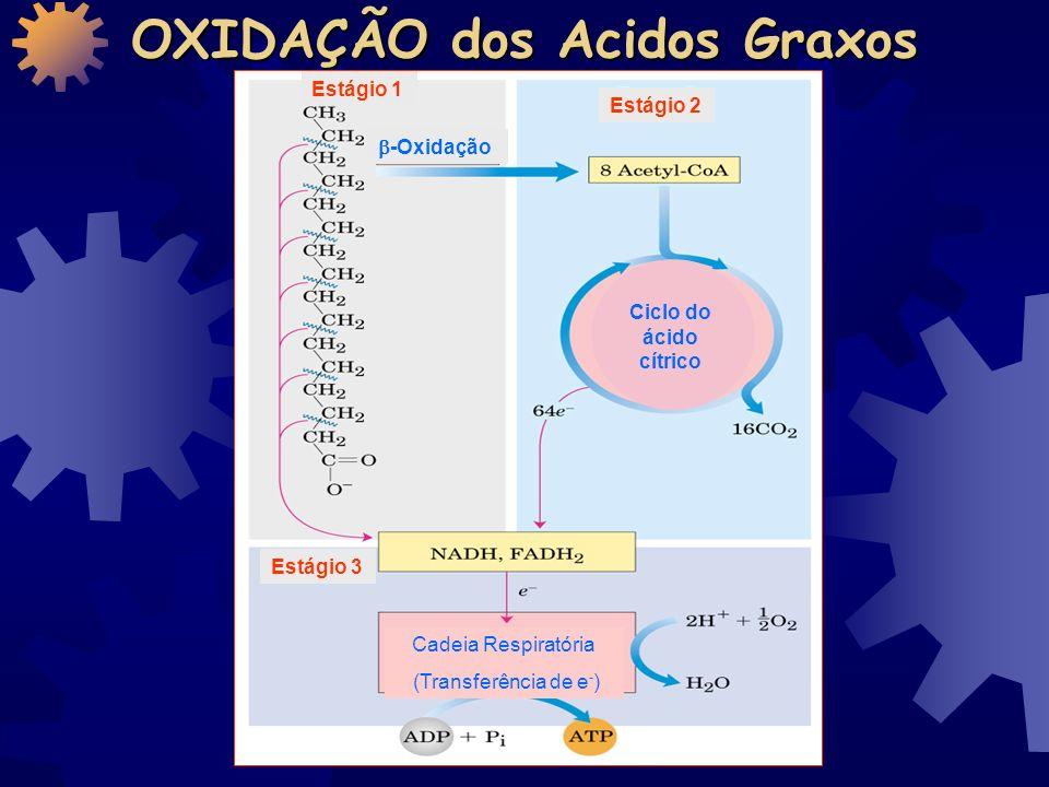 OXIDAÇÃO DOS ÁCIDOS GRAXOS Disciplina de Bioquímica FOP - UNICAMP