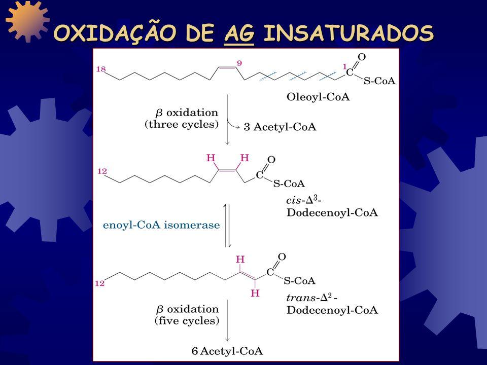 RENDIMENTO DA -OXIDAÇÃO Enzima que catalisa o passo da oxidação Número de NADH * ou FADH 2 ** formados Número de ATP formado ao final Acil-CoA desidrogenase7 FADH 2 14 -hidroxiacil-CoA desidrogenase7 NADH21 Isocitrato desidrogenase8 NADH24 -cetoglutarato desidrogenase8 NADH24 Succinil-CoA sintetase8 Succinato desidrogenase8 FADH 2 16 Malato desidrogenase8 NADH24 Total Produzido131 131 – 2 Gastos = 129 ATP/ mol de Ac.