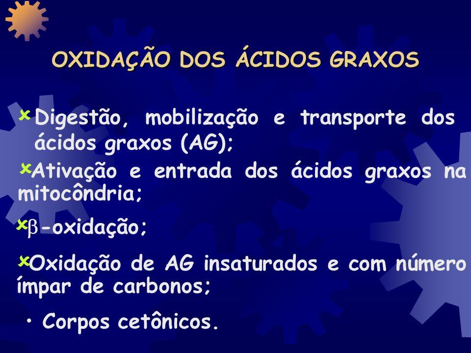 OXIDAÇÃO dos Acidos Graxos Ciclo do ácido cítrico -Oxidação Cadeia Respiratória (Transferência de e - ) Estágio 1 Estágio 3 Estágio 2
