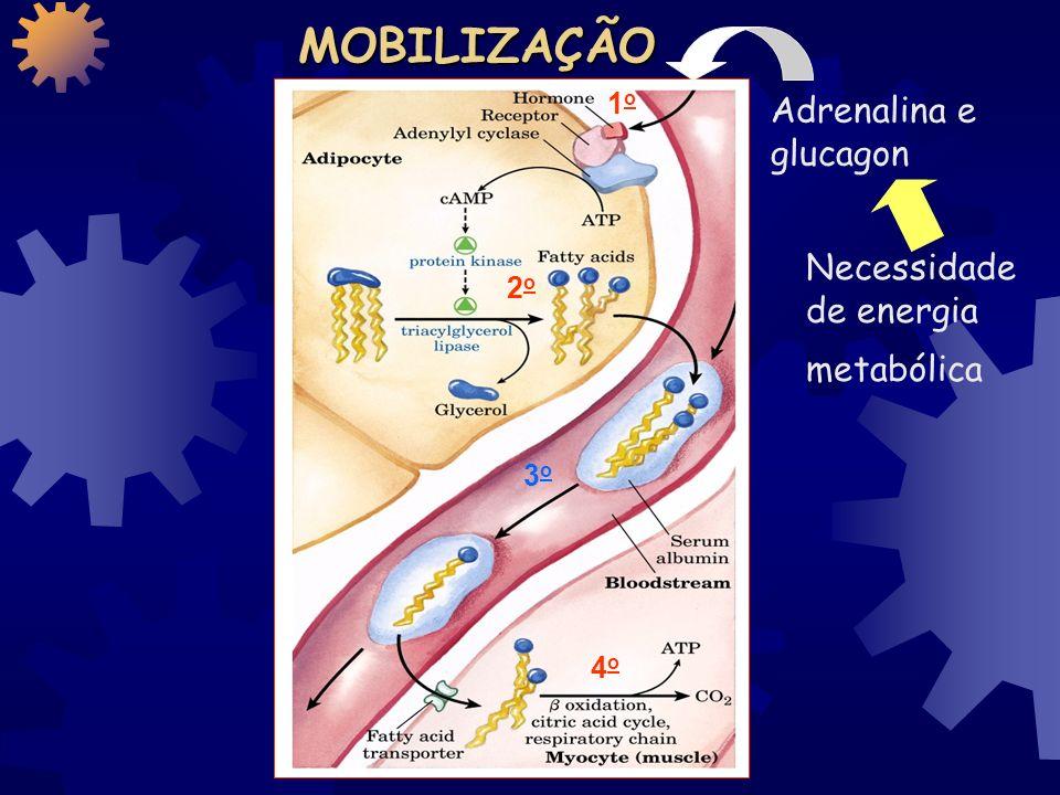 Apoproteínas Colesterol Triacilgliceróis ésteres do colesterol Fosfolipídios
