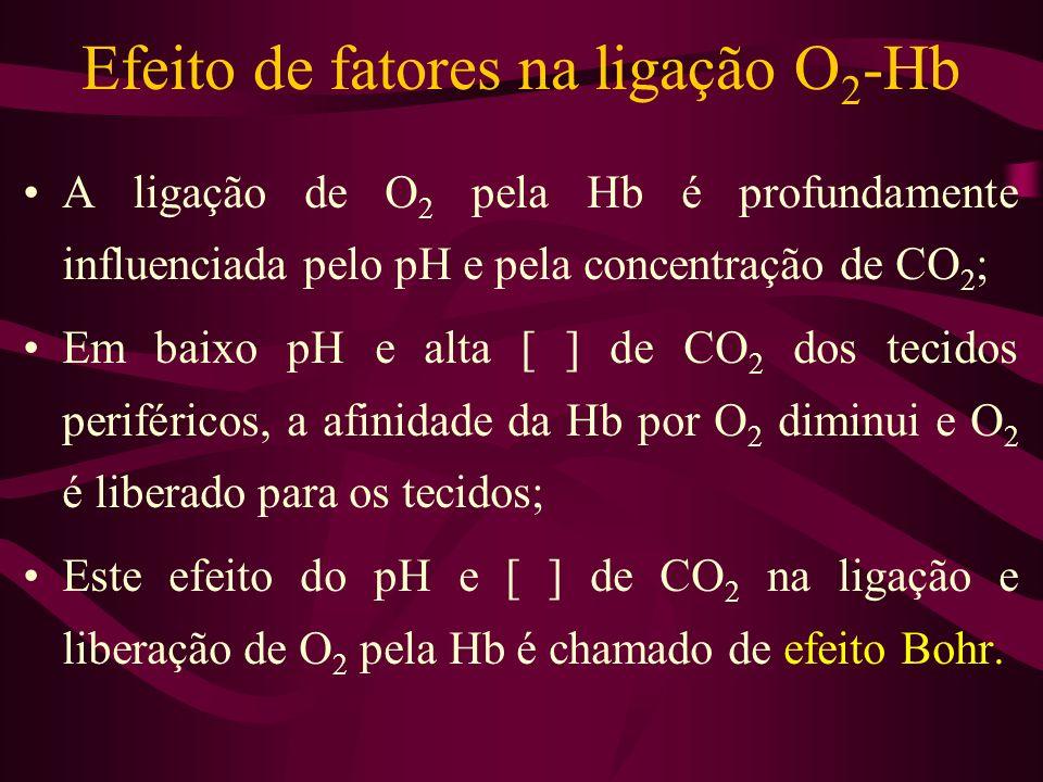 Efeito de fatores na ligação O 2 -Hb A ligação de O 2 pela Hb é profundamente influenciada pelo pH e pela concentração de CO 2 ; Em baixo pH e alta [