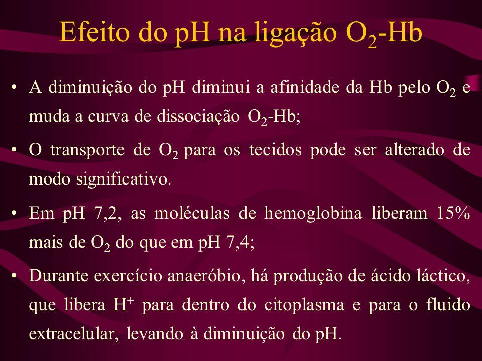 Efeito do pH na ligação O 2 -Hb A diminuição do pH diminui a afinidade da Hb pelo O 2 e muda a curva de dissociação O 2 -Hb; O transporte de O 2 para