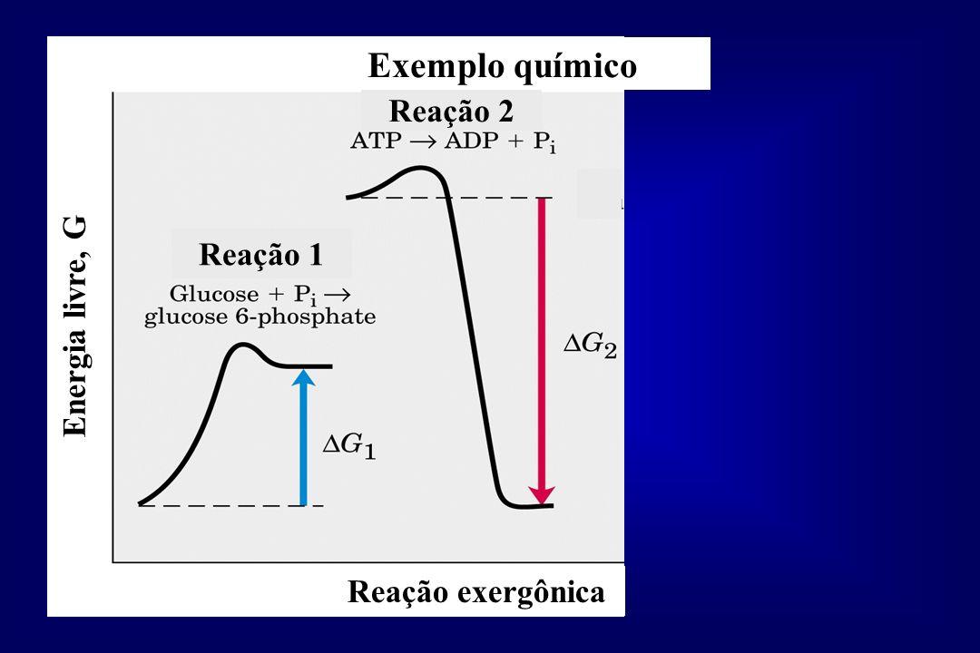 Exemplo químico Reação 1 Reação 2 Energia livre, G Reação exergônica