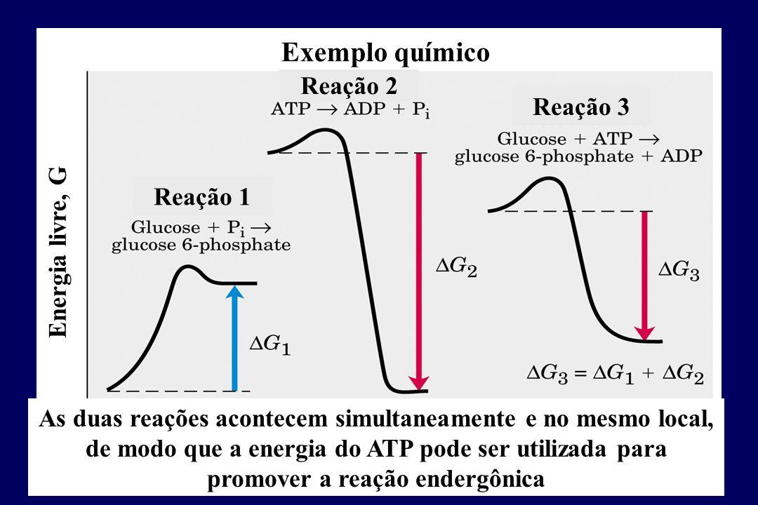 Exemplo químico Reação 1 Reação 2 Reação 3 Energia livre, G Reação acoplada As duas reações acontecem simultaneamente e no mesmo local, de modo que a