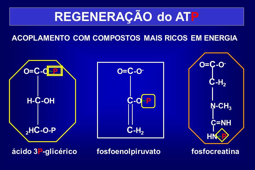 REGENERAÇÃO do ATP ACOPLAMENTO COM COMPOSTOS MAIS RICOS EM ENERGIA ácido 3P-glicérico O= C -O~P H- C -OH 2 H C -O-P fosfoenolpiruvato O= C -O - C -O~P
