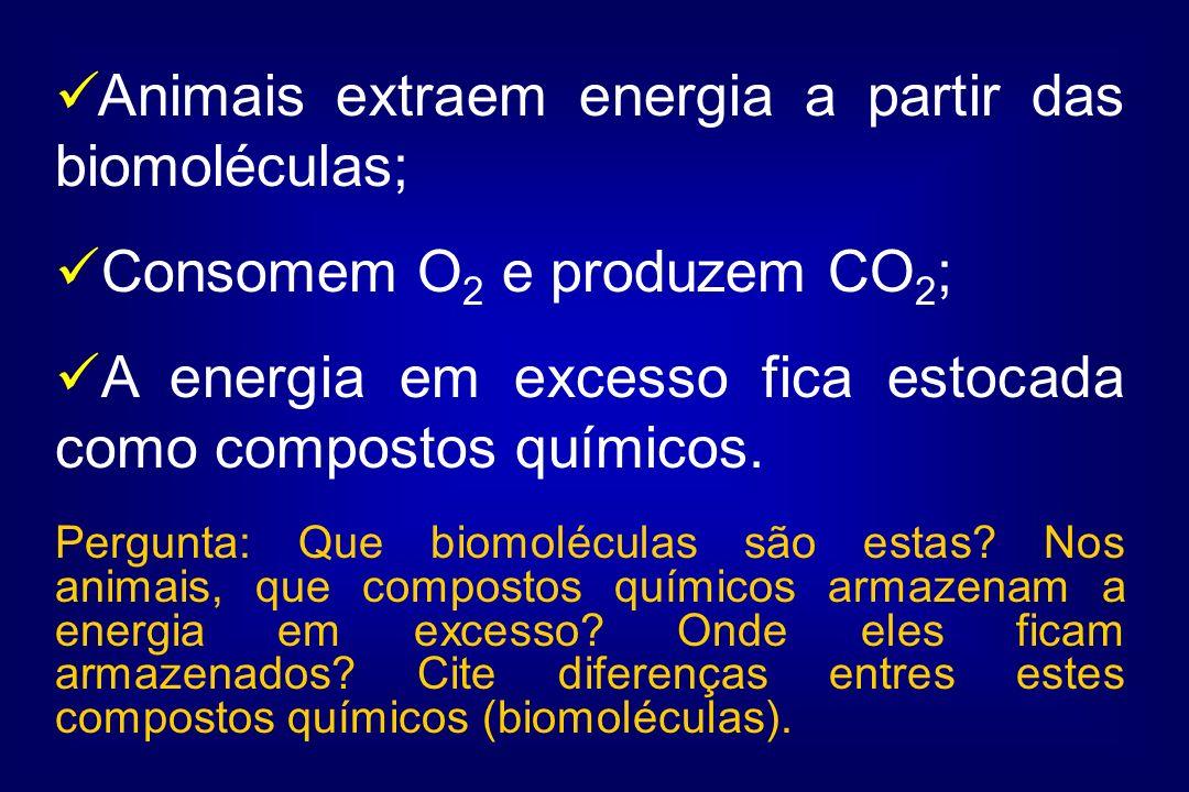 Animais extraem energia a partir das biomoléculas; Consomem O 2 e produzem CO 2 ; A energia em excesso fica estocada como compostos químicos. Pergunta