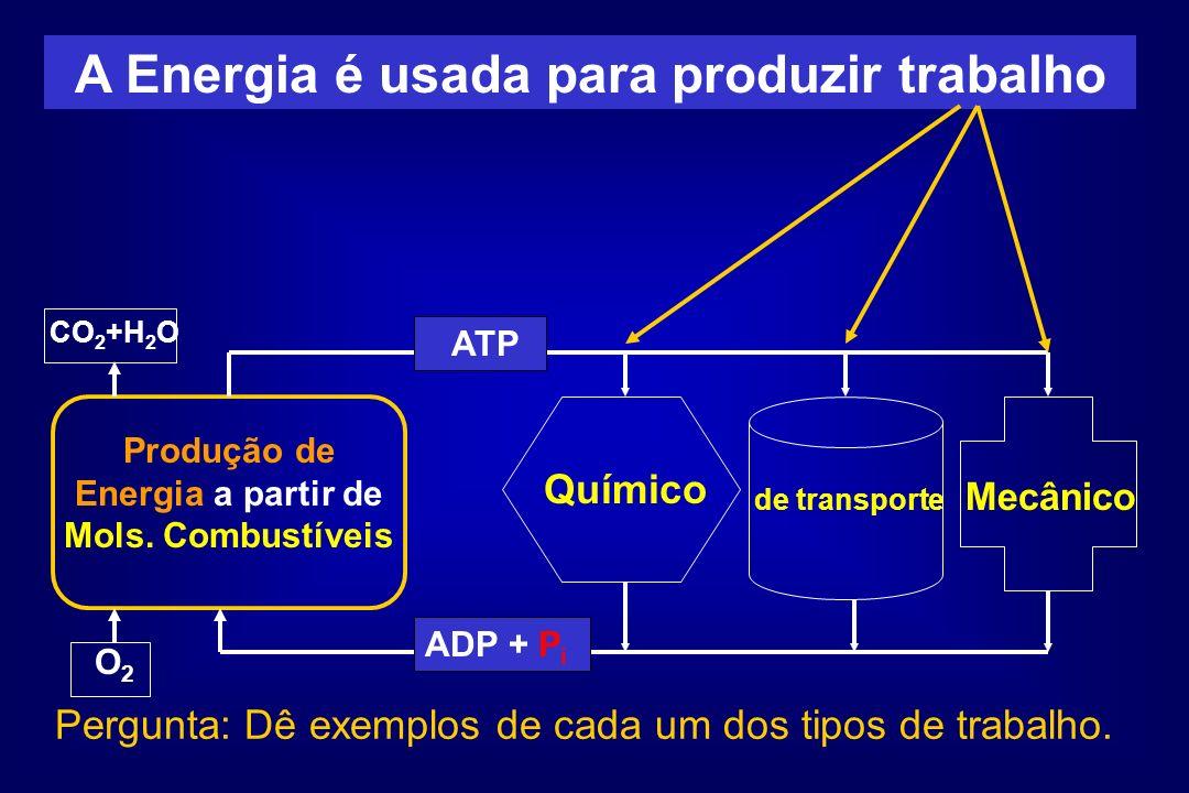 A Energia é usada para produzir trabalho Produção de Energia a partir de Mols. Combustíveis O2O2 CO 2 +H 2 O ATP Químico ADP + P i de transporte Mecân
