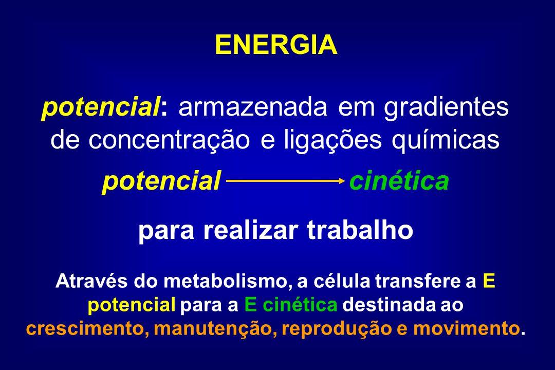 ENERGIA potencial: armazenada em gradientes de concentração e ligações químicas potencialcinética para realizar trabalho Através do metabolismo, a cél