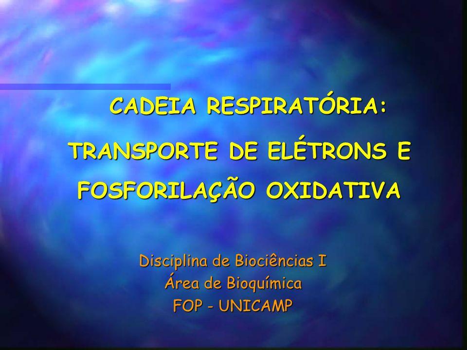 CADEIA RESPIRATÓRIA: CADEIA RESPIRATÓRIA: TRANSPORTE DE ELÉTRONS E FOSFORILAÇÃO OXIDATIVA Disciplina de Biociências I Área de Bioquímica FOP - UNICAMP