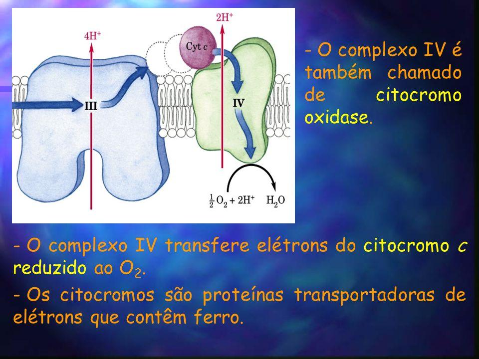 - O complexo IV transfere elétrons do citocromo c reduzido ao O 2.