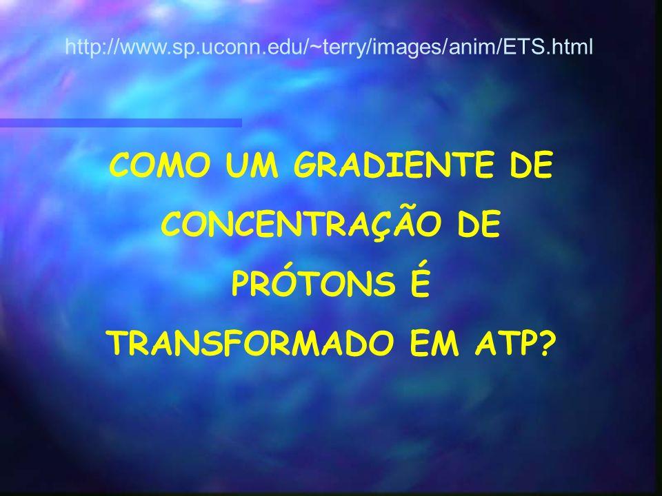 COMO UM GRADIENTE DE CONCENTRAÇÃO DE PRÓTONS É TRANSFORMADO EM ATP.