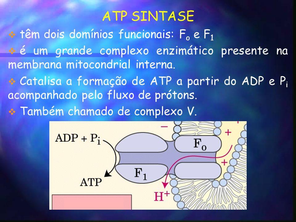 ATP SINTASE têm dois domínios funcionais: F o e F 1 é um grande complexo enzimático presente na membrana mitocondrial interna.