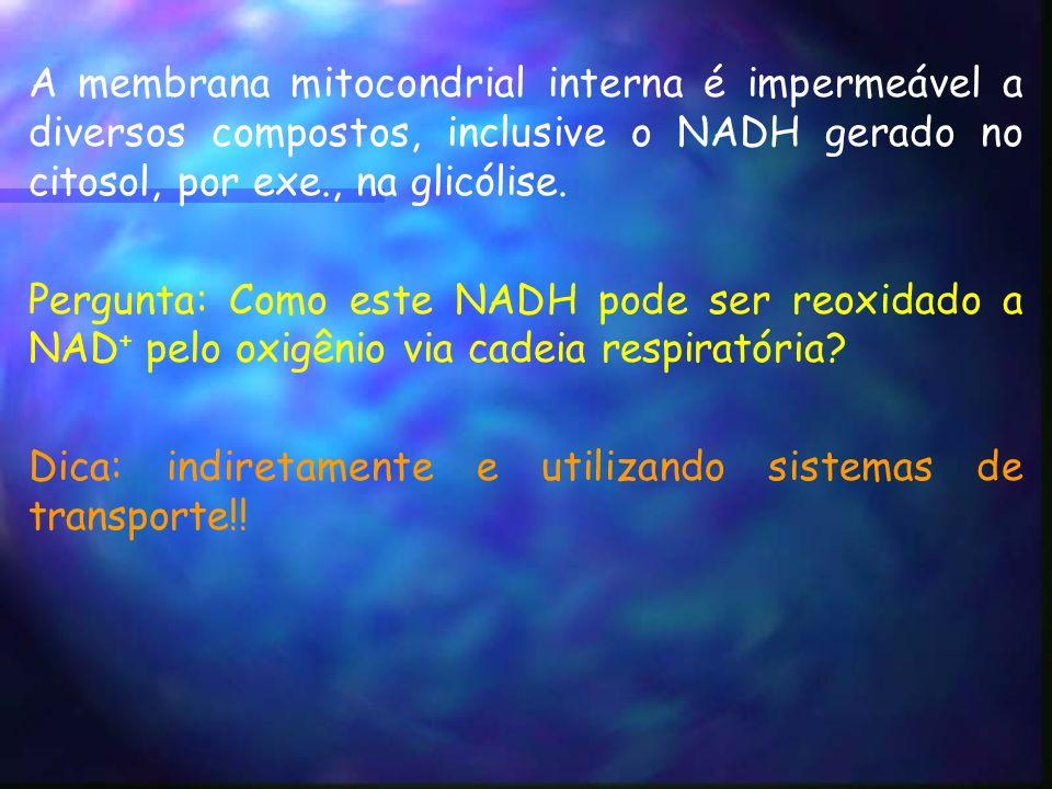A membrana mitocondrial interna é impermeável a diversos compostos, inclusive o NADH gerado no citosol, por exe., na glicólise.