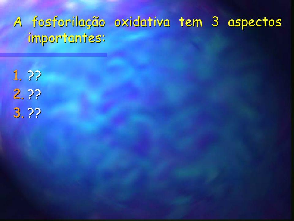 A fosforilação oxidativa tem 3 aspectos importantes: 1. 2. 3.