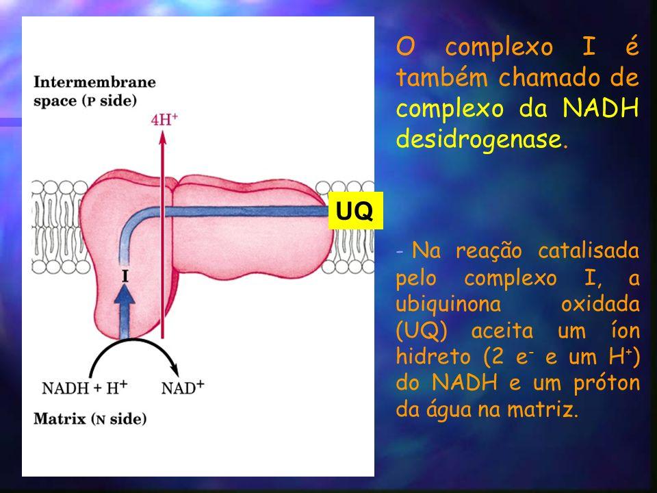 O complexo I é também chamado de complexo da NADH desidrogenase.